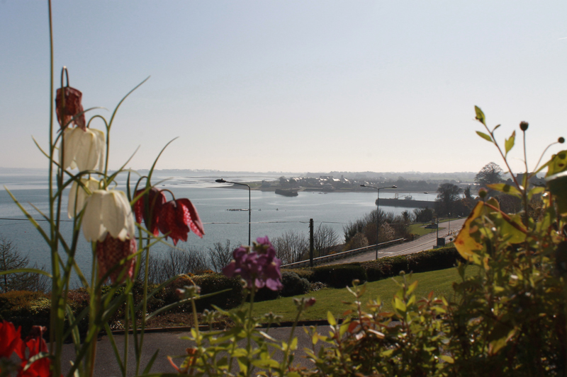 Carlingford Viewpoint flowers