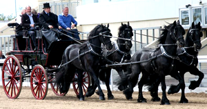 Co. Louth Agricultural Show - Bellurgan Park, Bellurgan, Cooley Peninsula Carlingford Festivals & Events - What's On Carlingford Festivals & Events – What's On Dundalk Horses